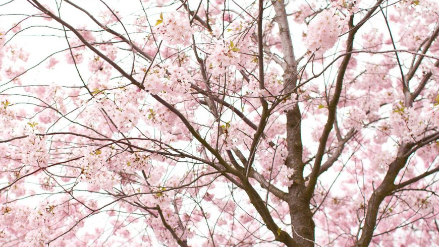 Spring Allergies: How to Get Relief from Runny Eyes